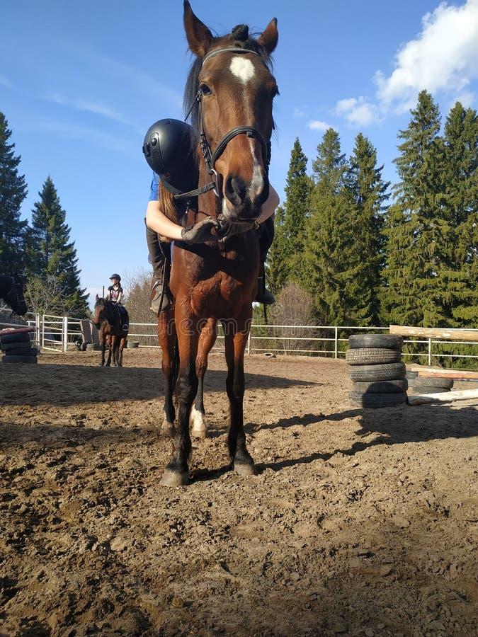 Paard ruiterliefde en me stock afbeeldingen