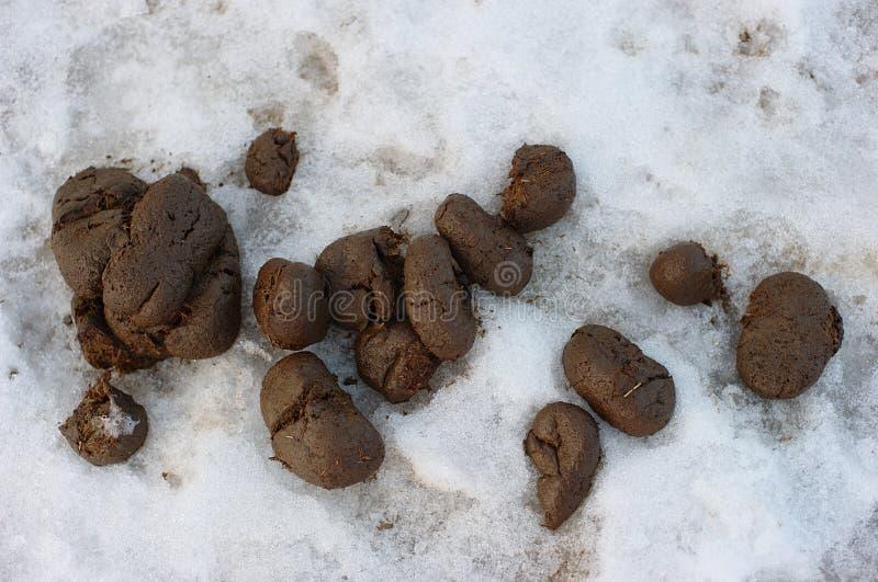 Paard shit op sneeuw stock fotografie