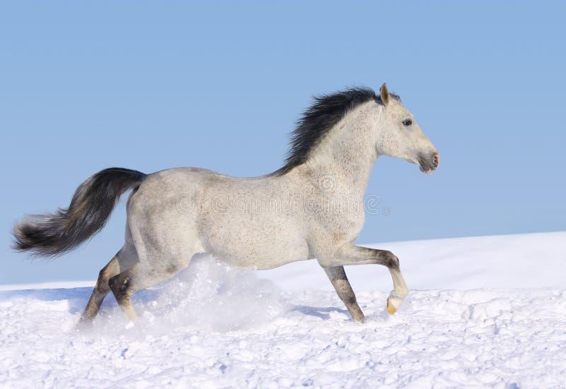 Paard in sneeuw stock foto's