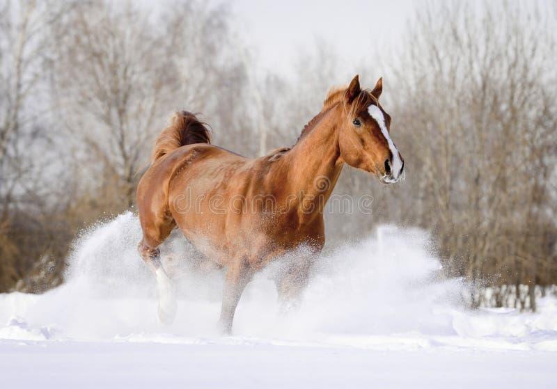 Paard in sneeuw stock foto
