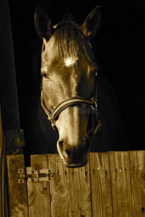Paard in stal stock fotografie