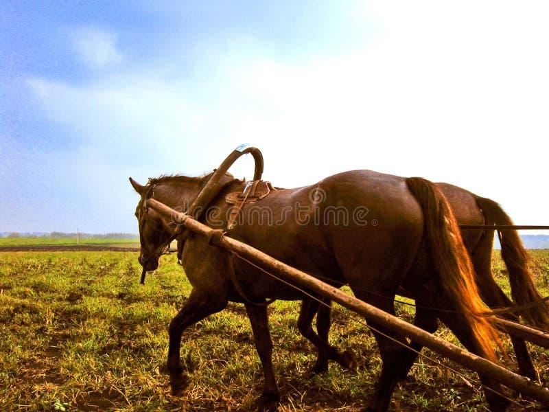 Paard van het Russische dorp stock afbeeldingen