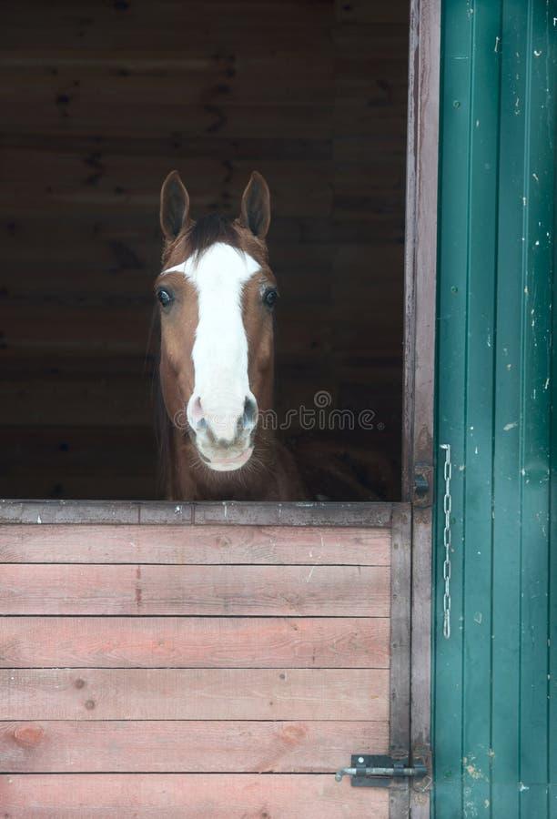 Paard in venster royalty-vrije stock foto