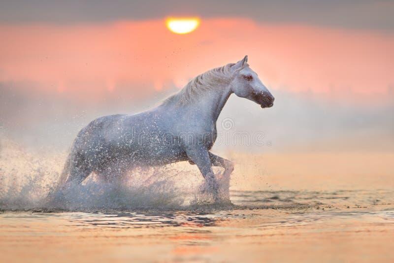 Paard in water in werking dat wordt gesteld dat royalty-vrije stock afbeeldingen