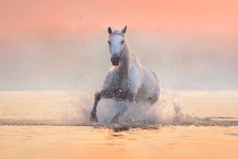 Paard in water in werking dat wordt gesteld dat stock foto