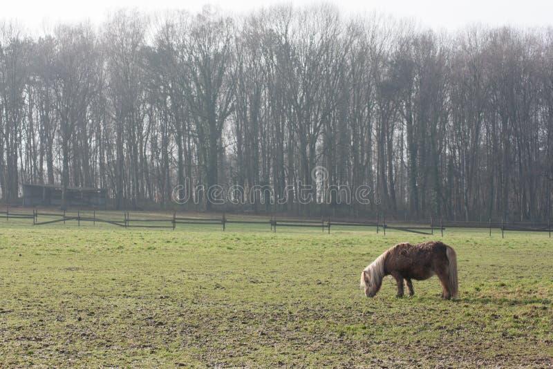 Paard in weide stock afbeelding