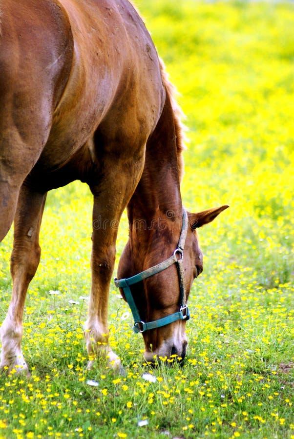 Paard in weide stock afbeeldingen