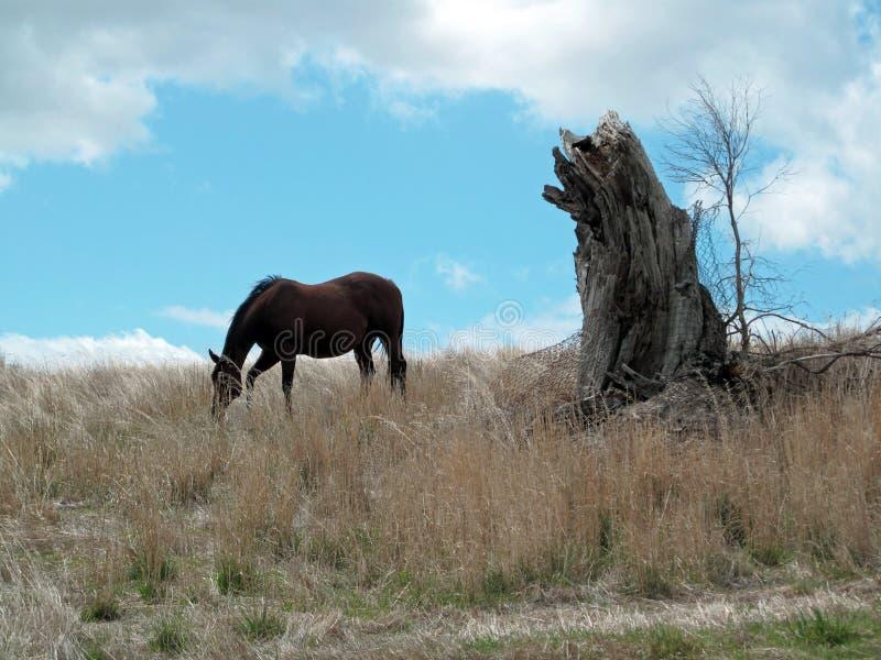 Paard Weidend Landschap met een Boomstomp royalty-vrije stock foto's