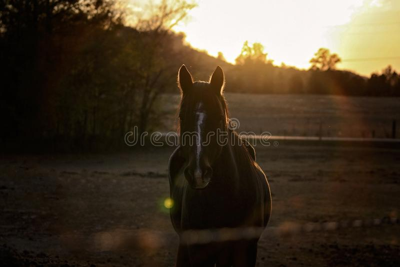 Paard in weiland bij Zonsondergang royalty-vrije stock fotografie