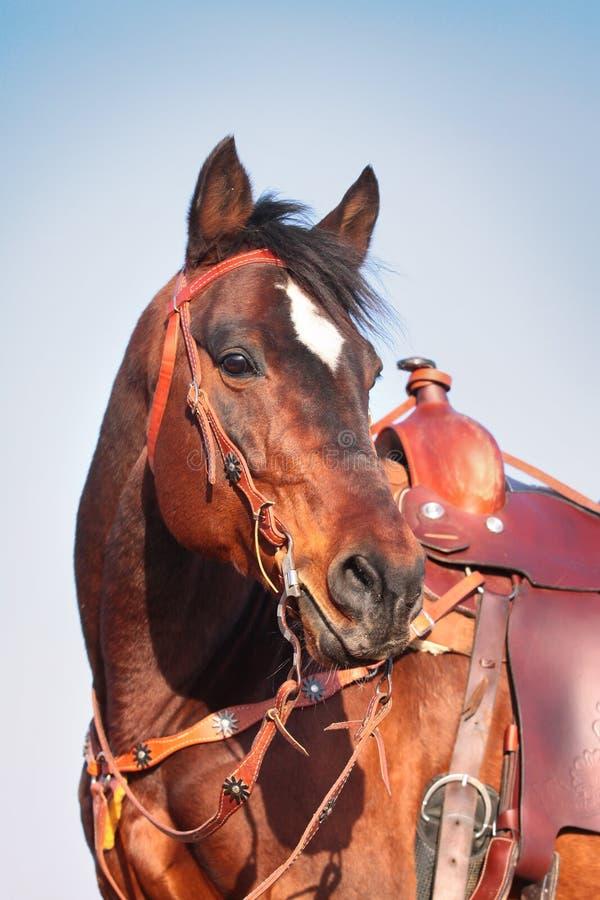 Paard in westelijke apparatuur royalty-vrije stock fotografie