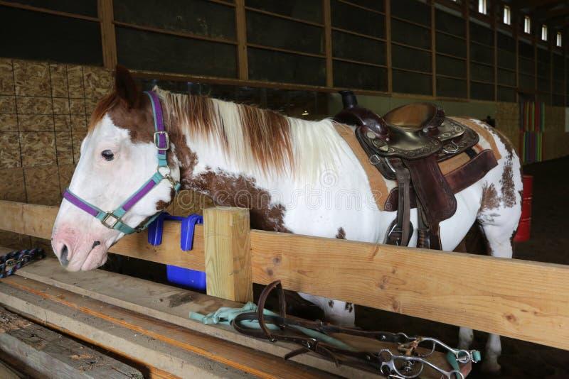 Paard zacht en klaar voor uitrusten stock fotografie