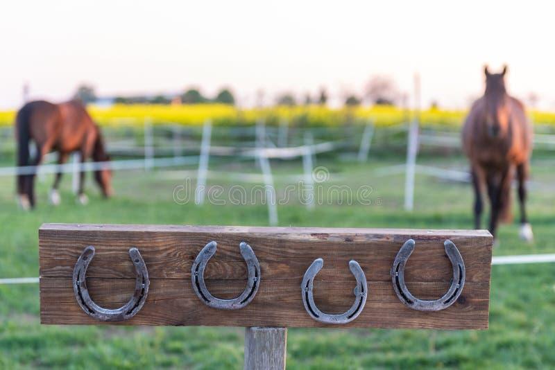Paard zonder hoeven in het weiland tijdens de zonsondergang 4 hoeven opgezet op een houten raad stock afbeelding