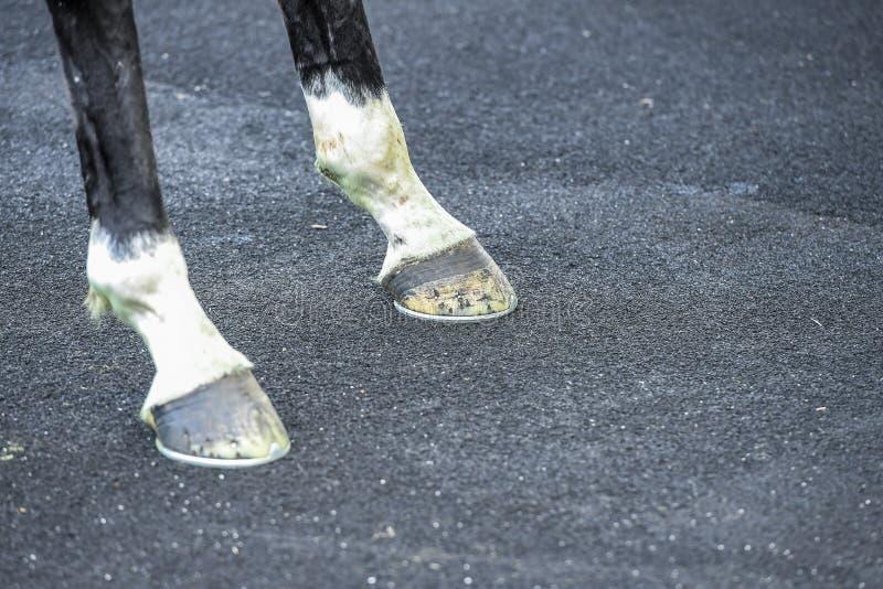 Paardbenen en hoofs royalty-vrije stock afbeelding