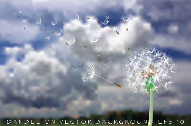 Paardebloem 20160614_3754 vector illustratie