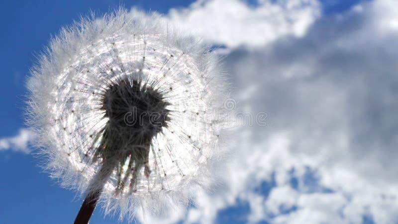 Paardebloem zoals een zon met zaden Tegen blauwe hemel met wolken Vredesconcept stock fotografie