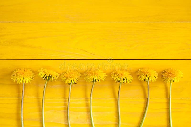 Paardebloembloemen op een gele achtergrond stock foto