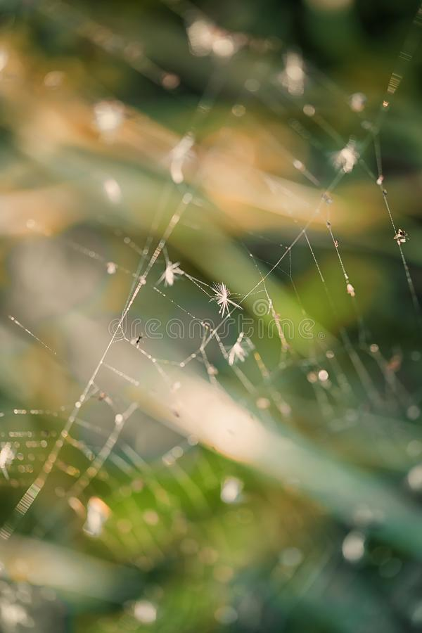 Paardebloemzaden op het Web in macrofotografie stock afbeelding