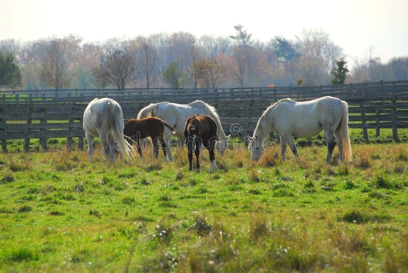 Paarden royalty-vrije stock afbeeldingen