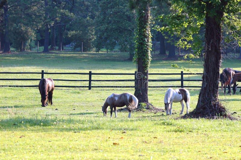 Paarden # 2 royalty-vrije stock fotografie