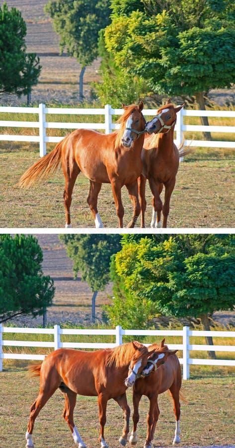 Paarden stock foto