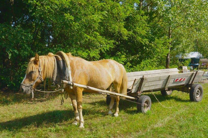 Paarden aan een kar op het landbouwbedrijf worden uitgerust dat dieren royalty-vrije stock foto's