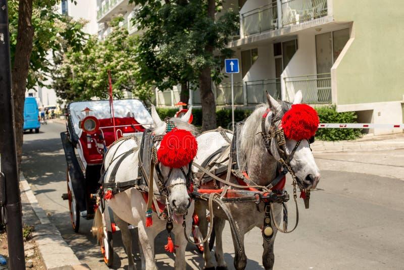 Paarden aan kar royalty-vrije stock foto