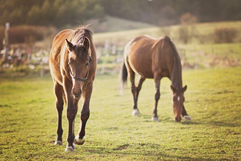 Paarden in aard royalty-vrije stock foto's