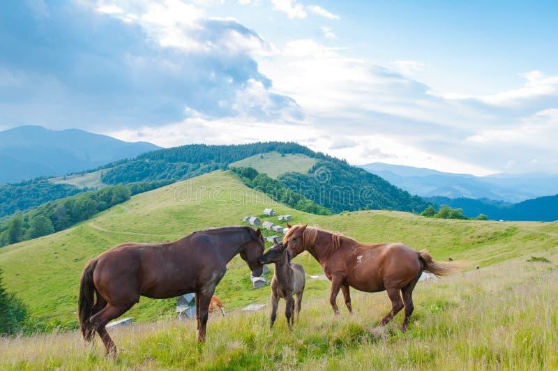 Paarden in aard familie van paarden in aard stock foto