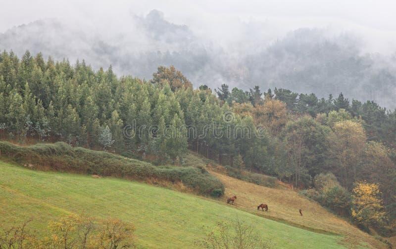 Paarden bij Baskisch Land royalty-vrije stock afbeeldingen