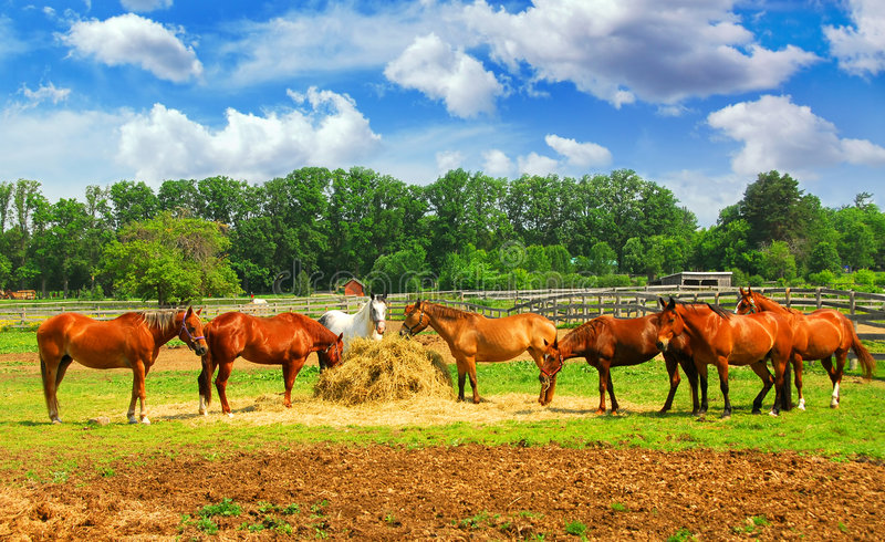 Paarden bij de boerderij royalty-vrije stock foto's