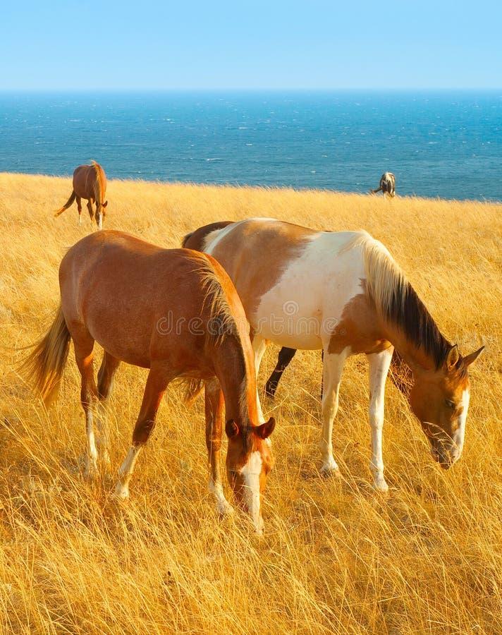 Paarden bij kust stock foto