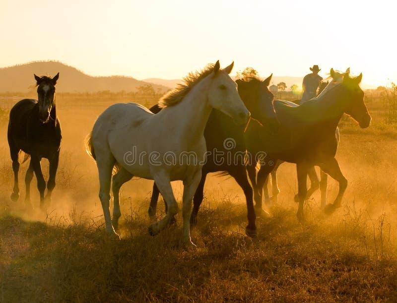 Paarden bij Schemer royalty-vrije stock afbeeldingen