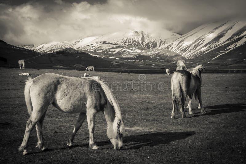 Paarden in de Italiaanse bergen - HDR royalty-vrije stock afbeeldingen