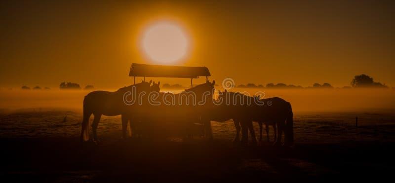 Paarden in de mist stock afbeeldingen