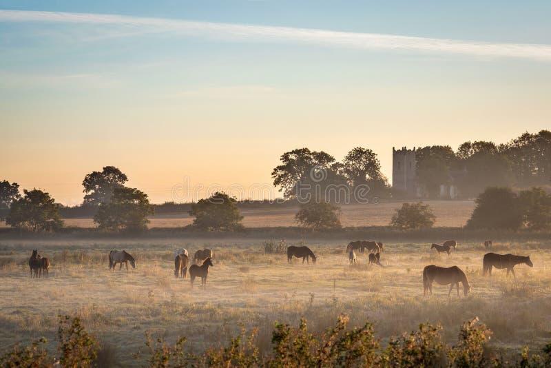 Paarden in de mist royalty-vrije stock foto's