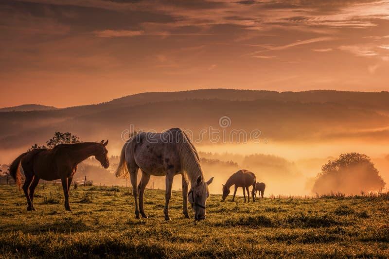 Paarden in de mist terwijl het doorbladeren stock foto