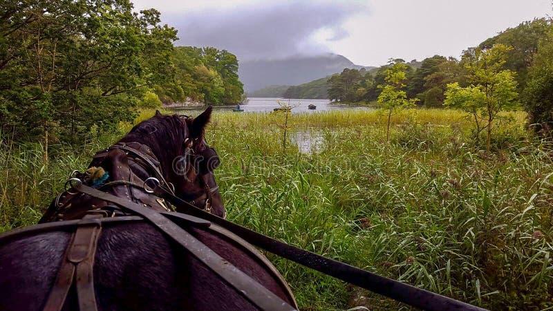Paarden in de natuur in schoonheidslandschap stock afbeeldingen