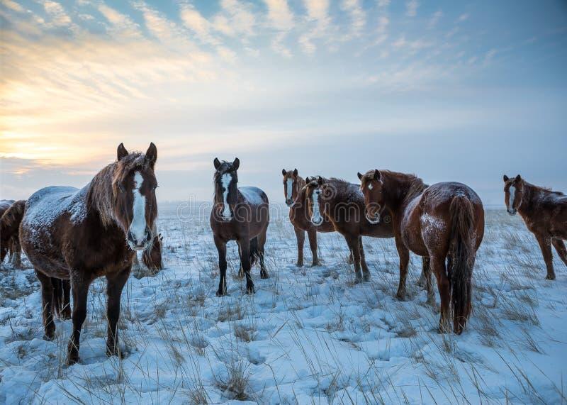 Paarden in de paarden steppe royalty-vrije stock foto