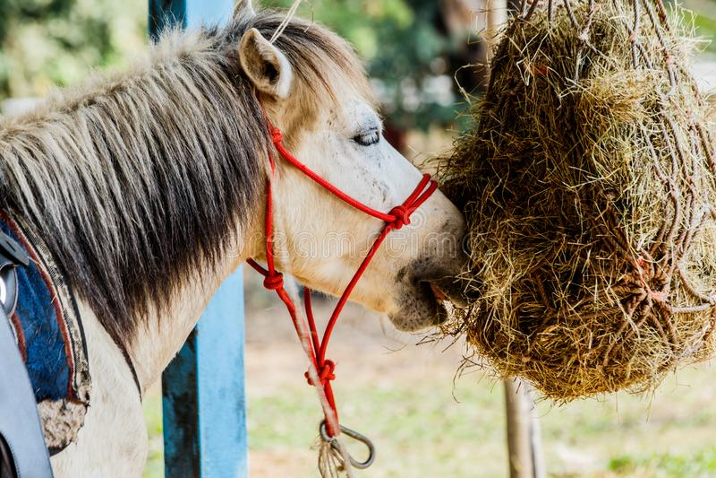 Paarden in de paddock die droge hooizomer eten royalty-vrije stock foto's