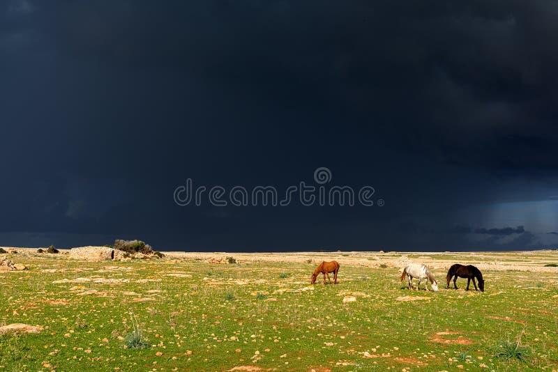 Paarden in de regen stock afbeeldingen