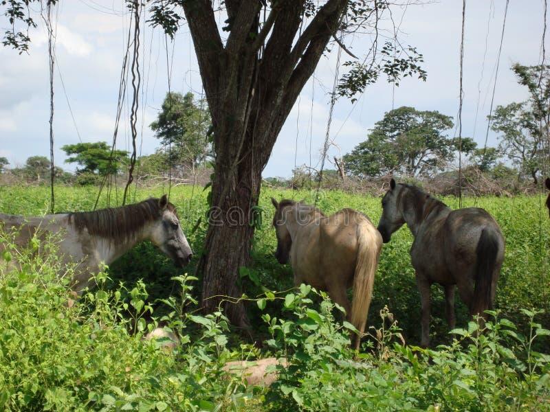 Paarden in de schaduw stock foto