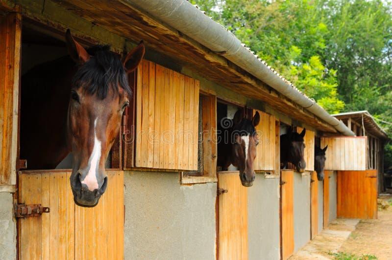 Paarden in de stal royalty-vrije stock afbeeldingen