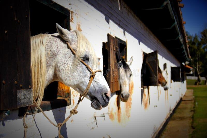 Paarden in de stal royalty-vrije stock fotografie