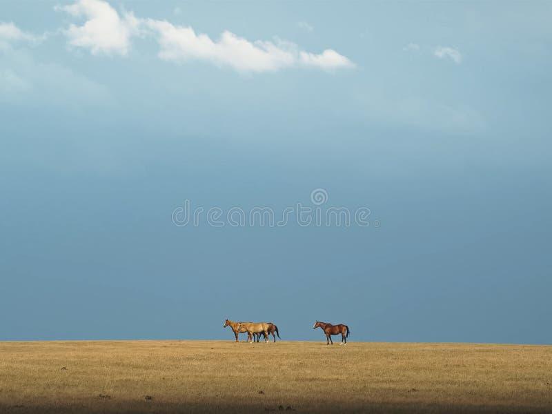 Paarden in de paarden steppe Een kleine kudde van paarden op een gebied royalty-vrije stock foto's