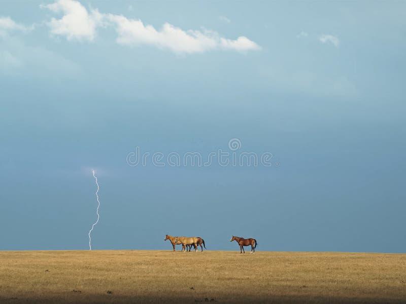 Paarden in de paarden steppe Een kleine kudde van paarden op een gebied royalty-vrije stock fotografie