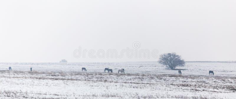 Paarden in de steppe in de winter royalty-vrije stock afbeelding