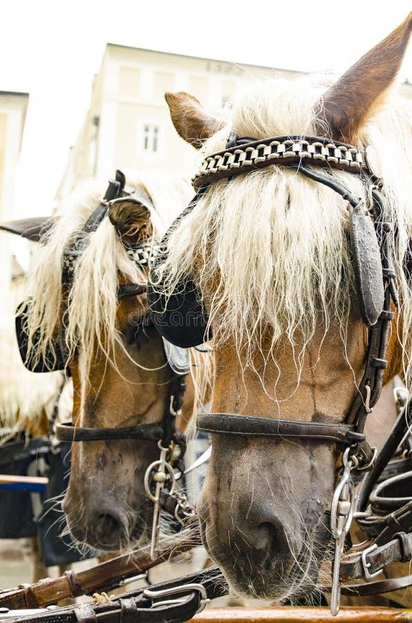 Paarden in de uitrusting royalty-vrije stock afbeelding