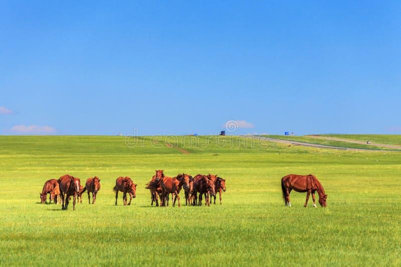 Paarden in de weide stock foto