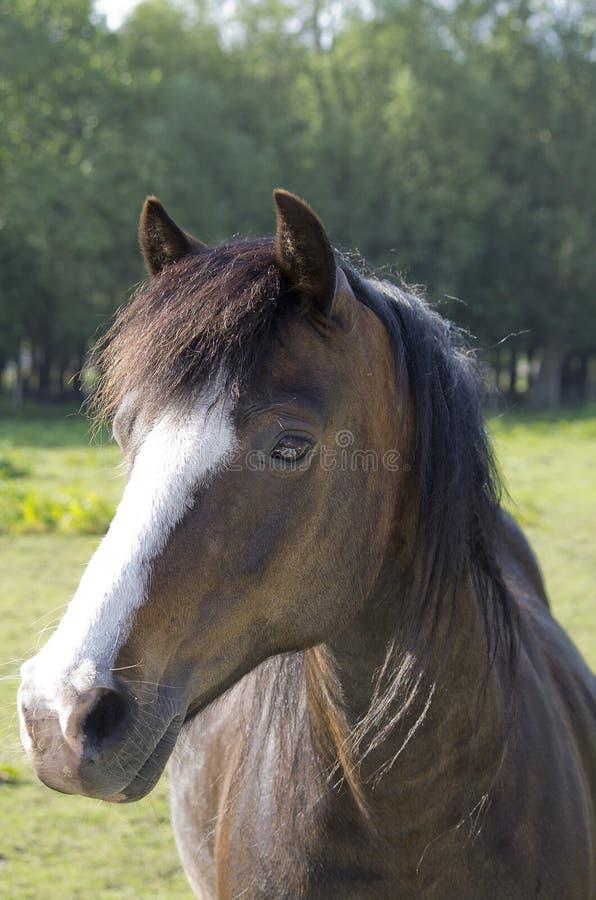 Paarden in de Zomerweide stock foto