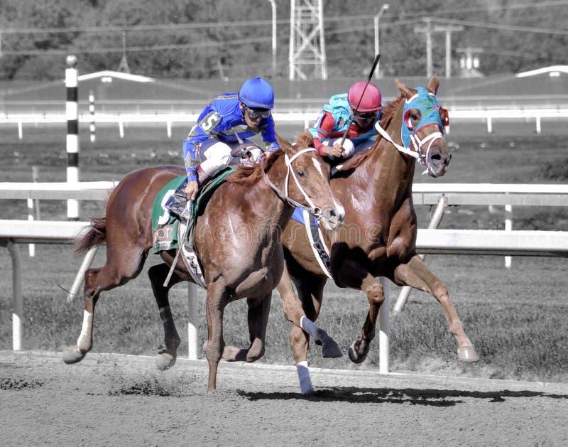 Paarden die aan de Afwerkingslijn drijven stock foto's